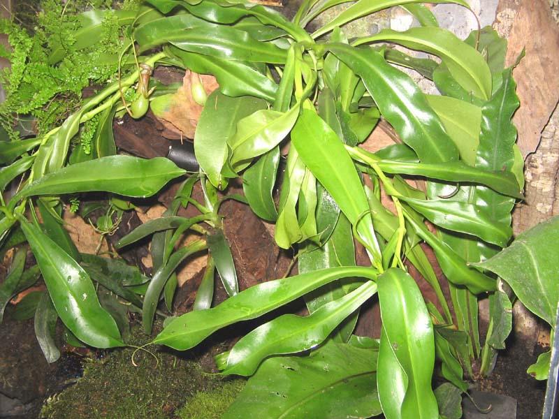 pothos plante entretien feuille jaune