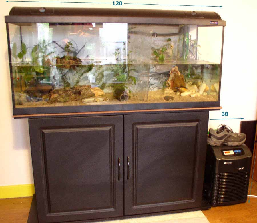 aquarium pour axolotl axolotl et groupe froid. Black Bedroom Furniture Sets. Home Design Ideas